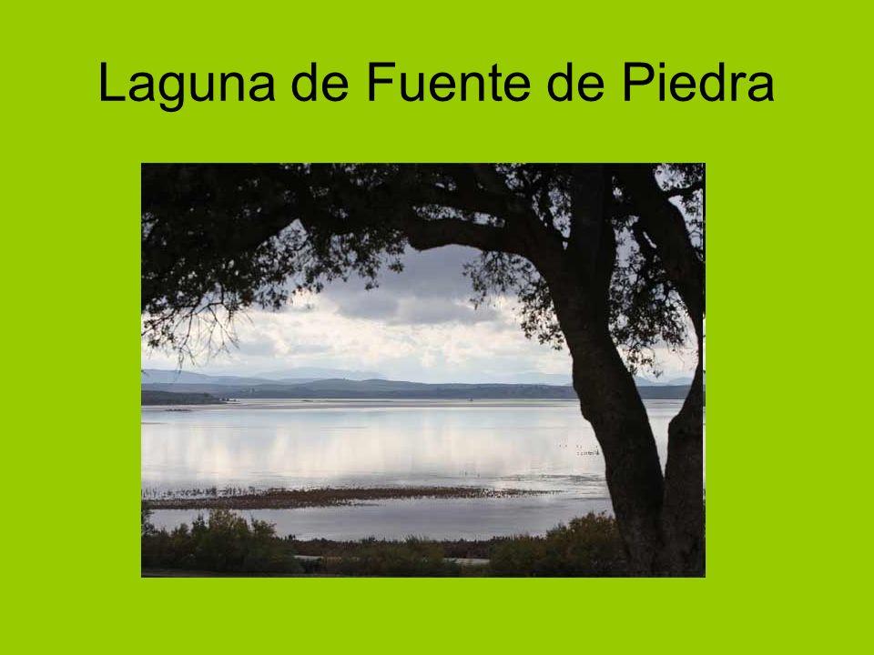 Laguna de Fuente de Piedra