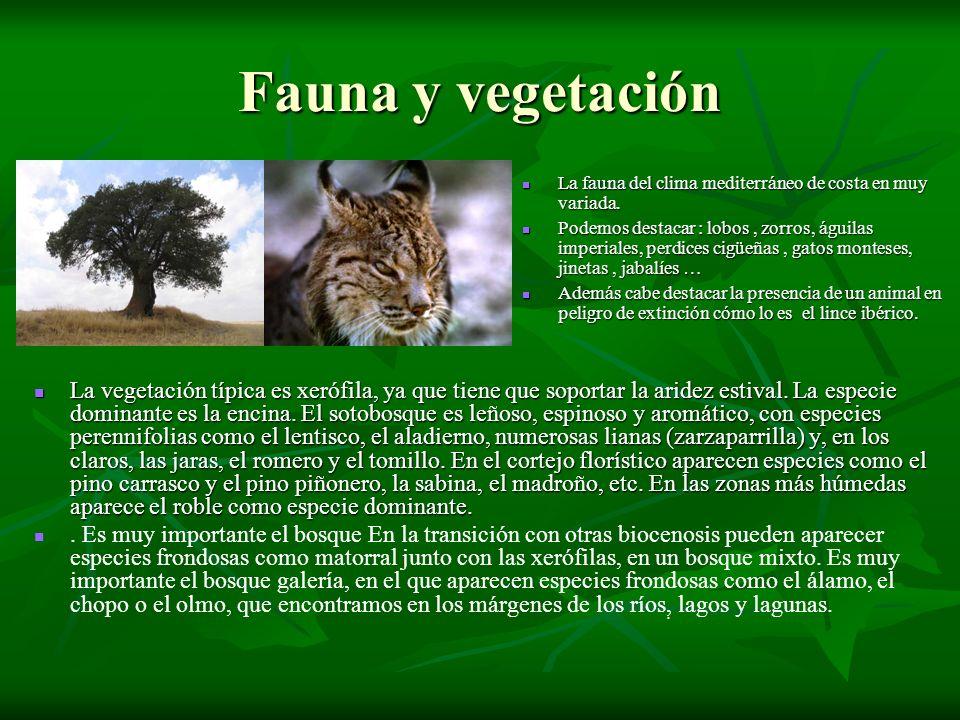 Fauna y vegetación La fauna del clima mediterráneo de costa en muy variada. La fauna del clima mediterráneo de costa en muy variada. Podemos destacar