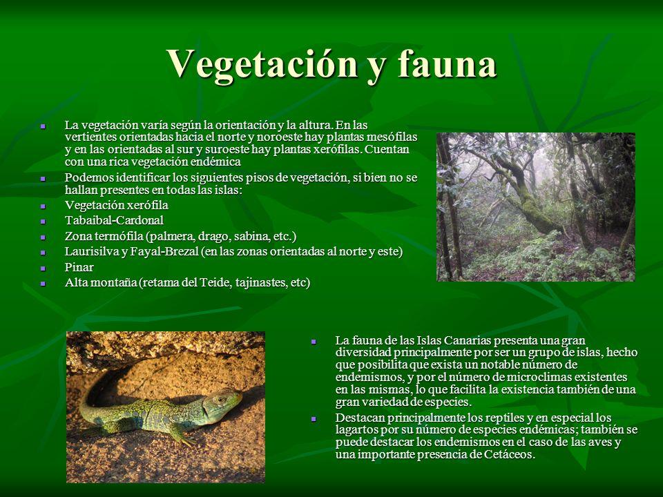 Vegetación y fauna La vegetación varía según la orientación y la altura. En las vertientes orientadas hacia el norte y noroeste hay plantas mesófilas