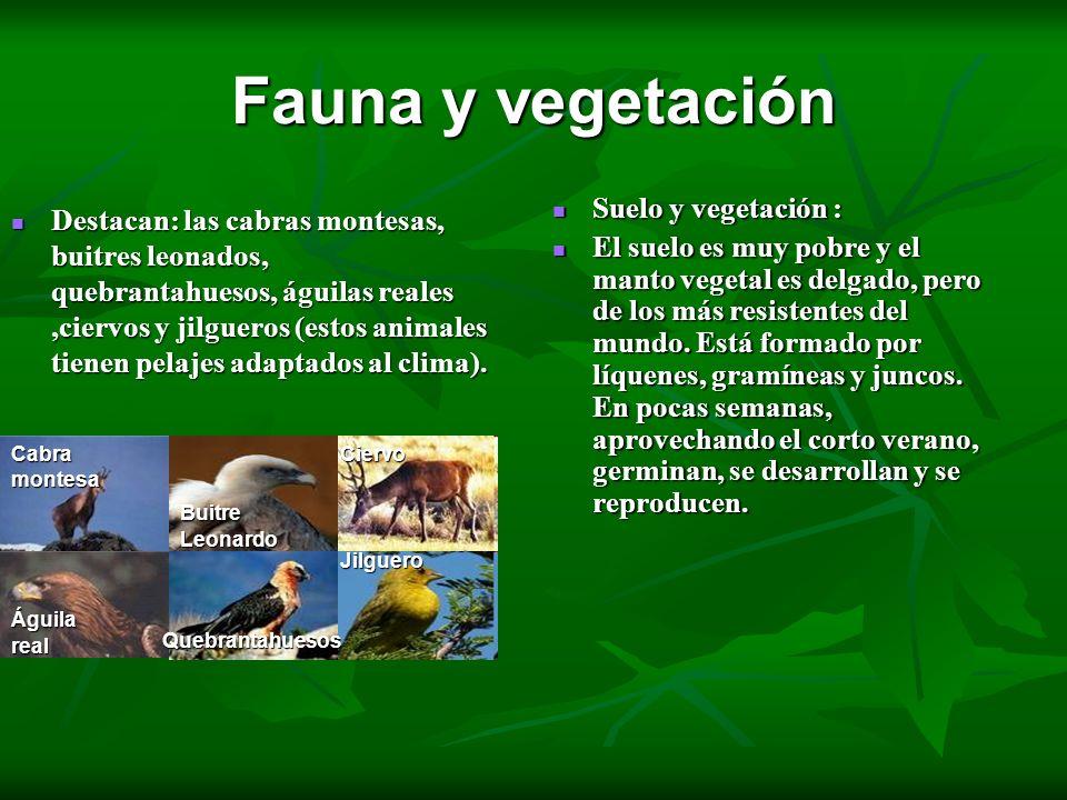 Fauna y vegetación Destacan: las cabras montesas, buitres leonados, quebrantahuesos, águilas reales,ciervos y jilgueros (estos animales tienen pelajes