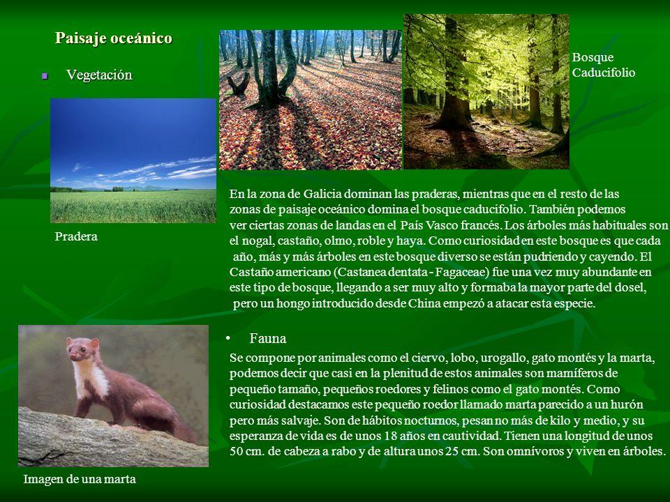 Paisaje oceánico Vegetación Vegetación En la zona de Galicia dominan las praderas, mientras que en el resto de las zonas de paisaje oceánico domina el