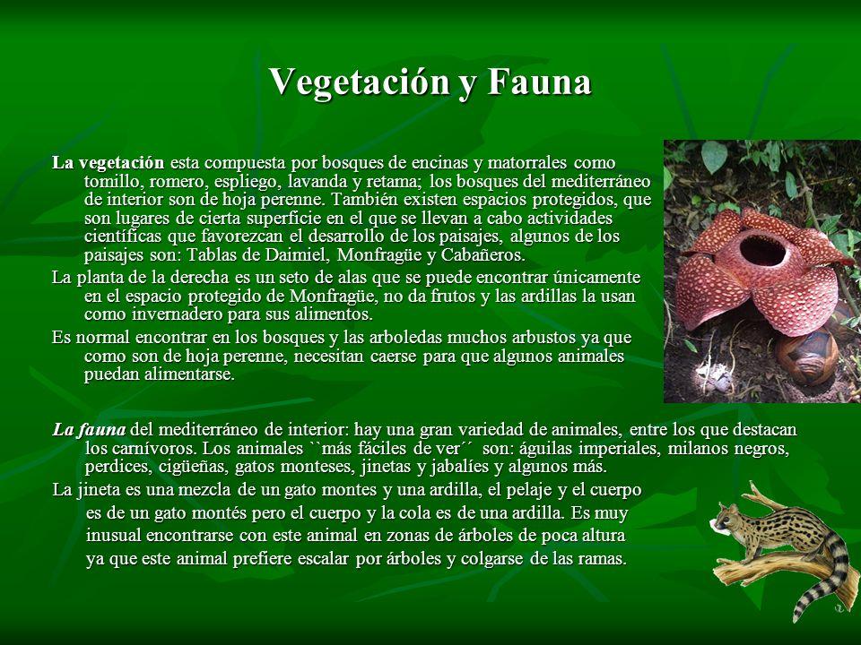 Vegetación y Fauna La vegetación esta compuesta por bosques de encinas y matorrales como tomillo, romero, espliego, lavanda y retama; los bosques del