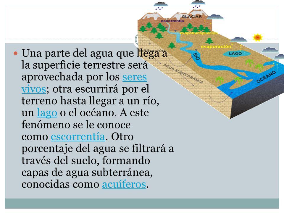 Una parte del agua que llega a la superficie terrestre será aprovechada por los seres vivos; otra escurrirá por el terreno hasta llegar a un río, un l