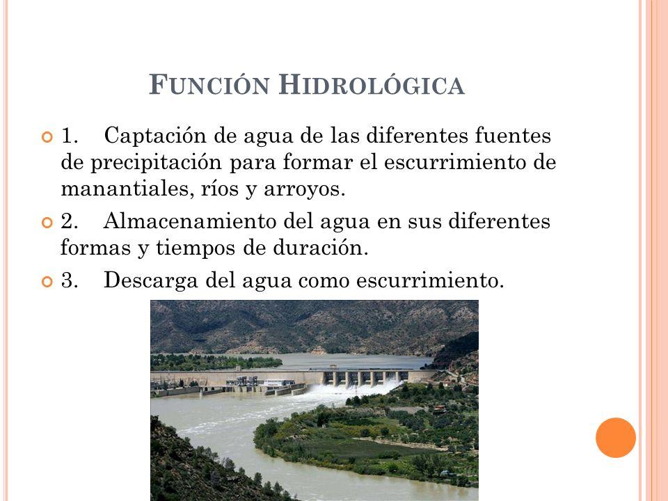 F UNCIÓN H IDROLÓGICA 1. Captación de agua de las diferentes fuentes de precipitación para formar el escurrimiento de manantiales, ríos y arroyos. 2.