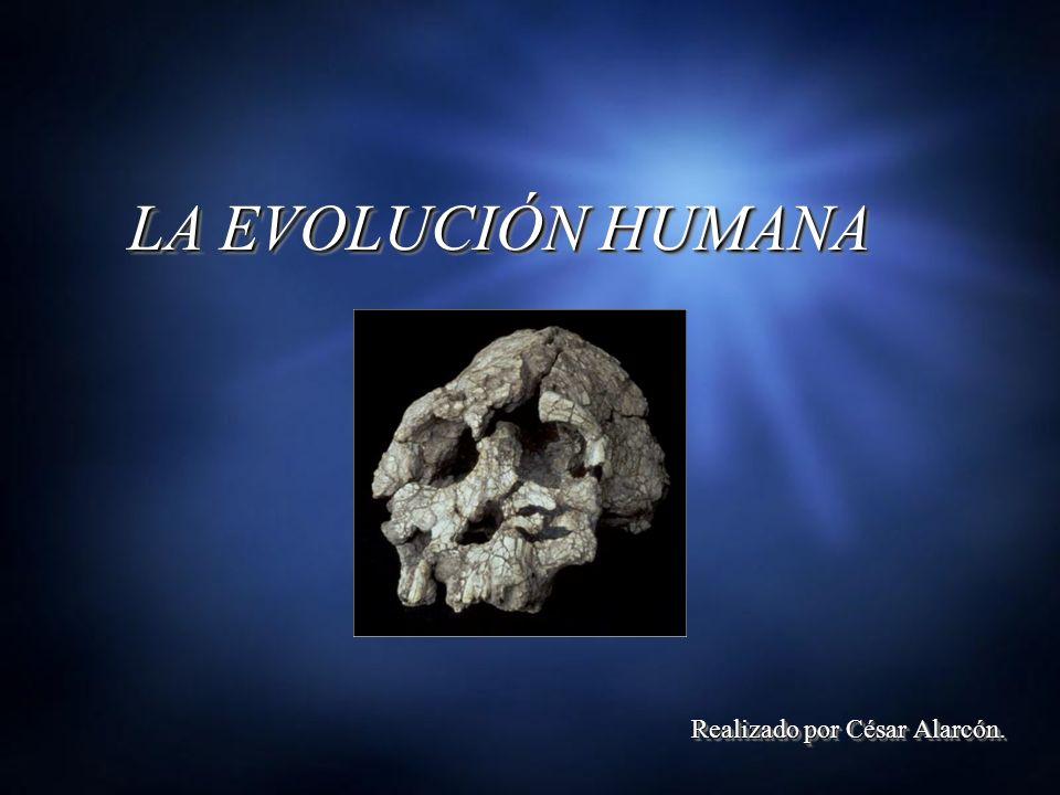 LA EVOLUCIÓN HUMANA Realizado por César Alarcón.