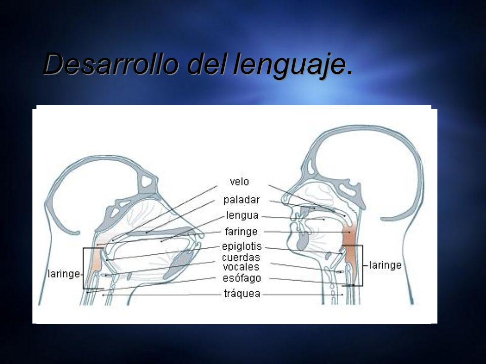 Desarrollo del lenguaje.