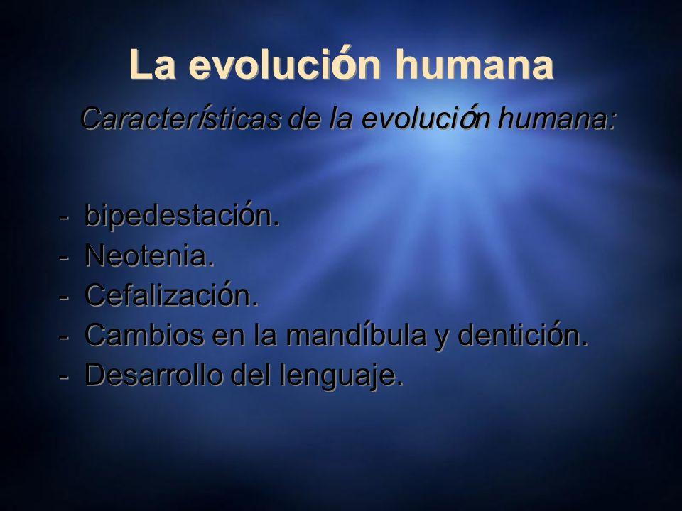 La evoluci ó n humana Caracter í sticas de la evoluci ó n humana: -bipedestaci ó n. -Neotenia. -Cefalizaci ó n. -Cambios en la mand í bula y dentici ó