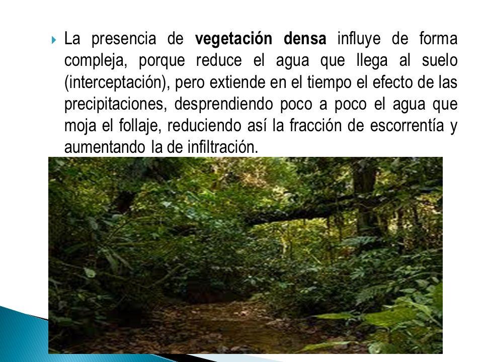 La presencia de vegetación densa influye de forma compleja, porque reduce el agua que llega al suelo (interceptación), pero extiende en el tiempo el e