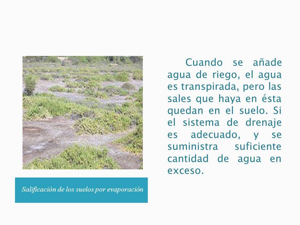 Salificación de los suelos por evaporación Cuando se añade agua de riego, el agua es transpirada, pero las sales que haya en ésta quedan en el suelo.