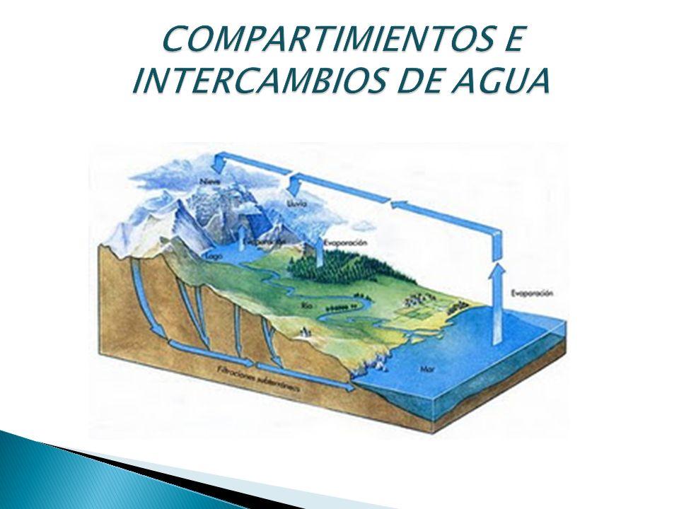 El agua se distribuye desigualmente entre los distintos compartimentos, y los procesos por los que éstos intercambian el agua se dan a ritmos heterogéneos.