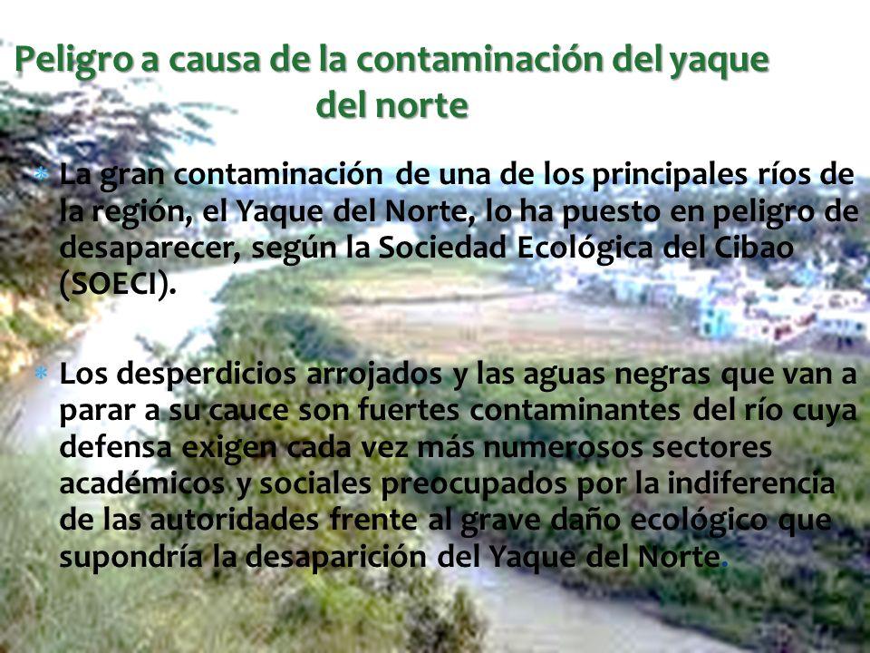 Peligro a causa de la contaminación del yaque del norte La gran contaminación de una de los principales ríos de la región, el Yaque del Norte, lo ha p