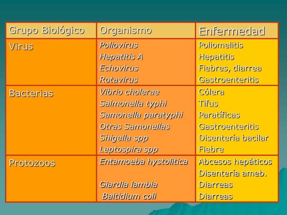 Grupo Biológico OrganismoEnfermedad VirusPoliovirus Hepatitis A EchovirusRotavirusPoliomelitisHepatitis Fiebres, diarrea Gastroenteritis Bacterias Vib