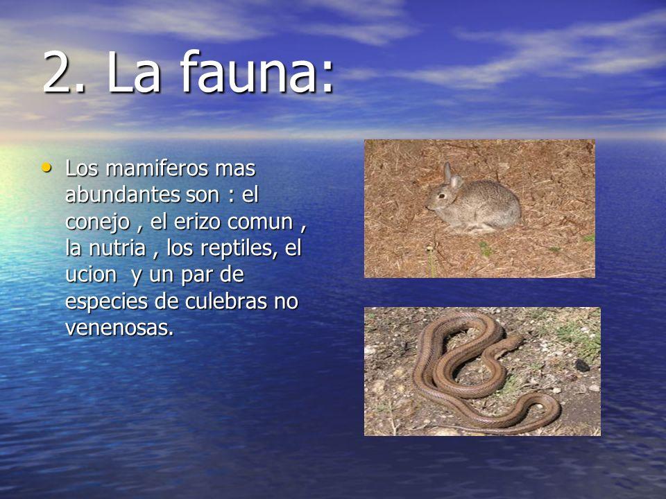 2. La fauna: Los mamiferos mas abundantes son : el conejo, el erizo comun, la nutria, los reptiles, el ucion y un par de especies de culebras no venen