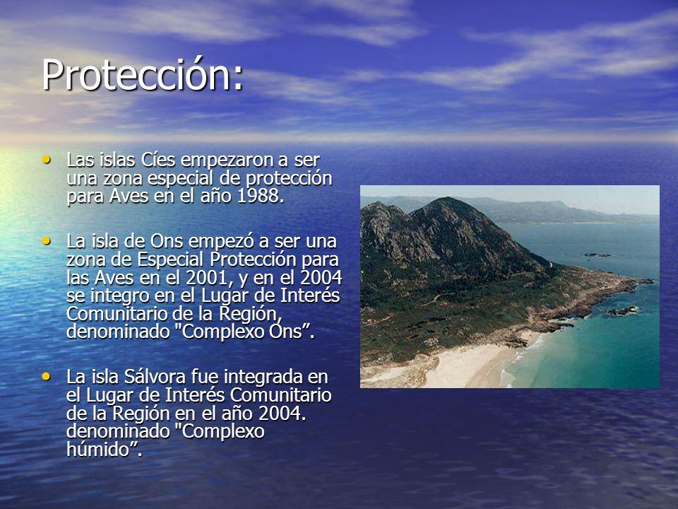 Protección: Las islas Cíes empezaron a ser una zona especial de protección para Aves en el año 1988. Las islas Cíes empezaron a ser una zona especial