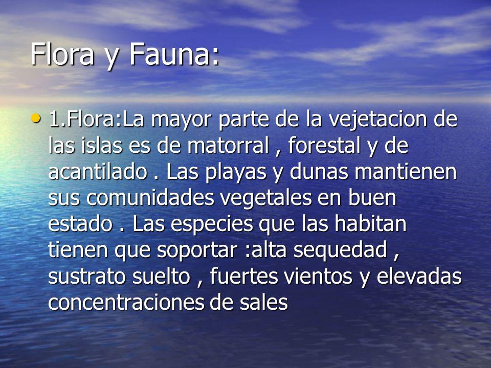 Flora y Fauna: 1.Flora:La mayor parte de la vejetacion de las islas es de matorral, forestal y de acantilado. Las playas y dunas mantienen sus comunid