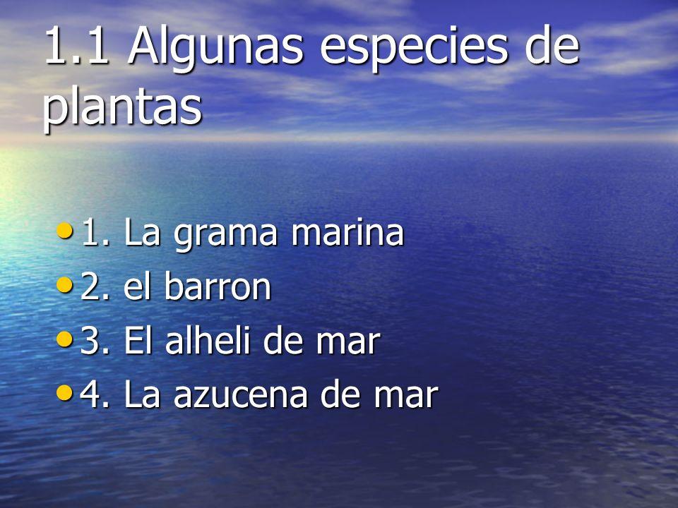 1.1 Algunas especies de plantas 1. La grama marina 1. La grama marina 2. el barron 2. el barron 3. El alheli de mar 3. El alheli de mar 4. La azucena