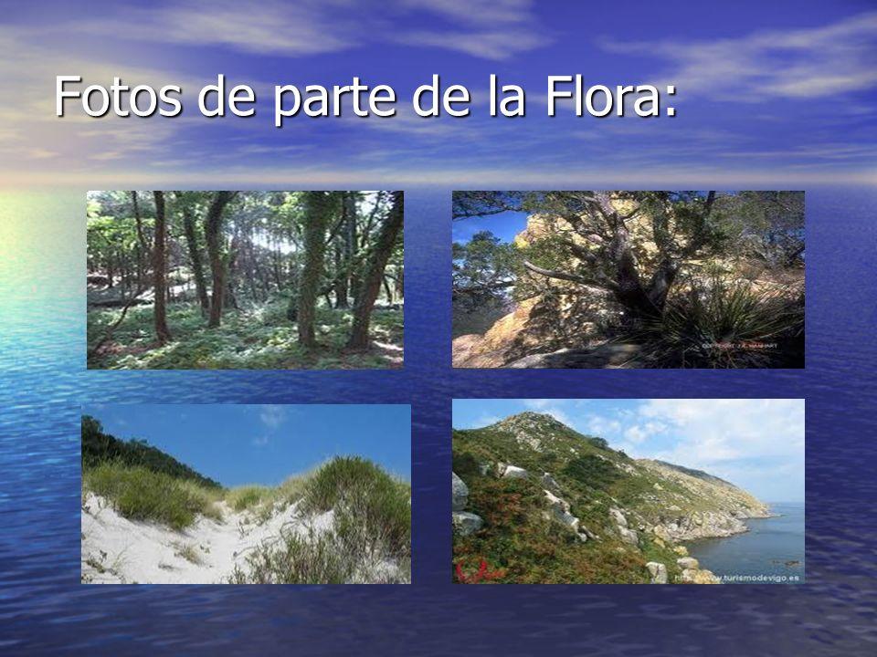 Fotos de parte de la Flora: