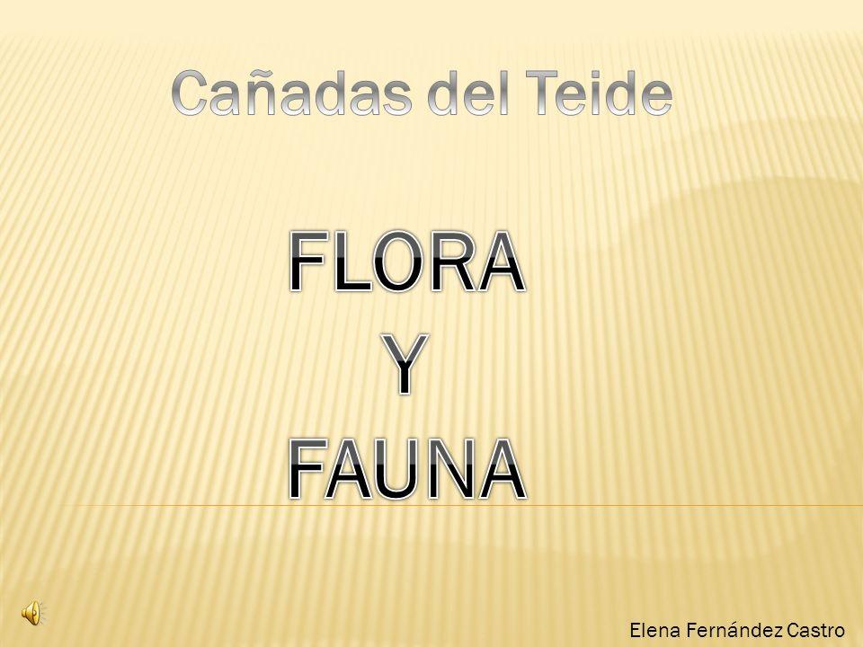 Elena Fernández Castro