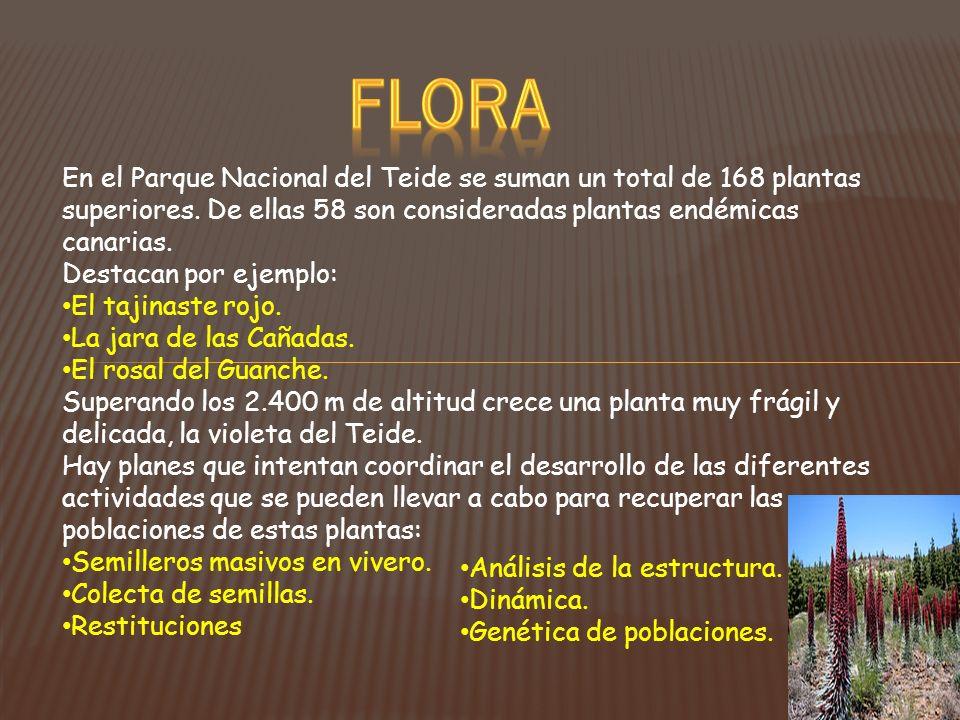 En el Parque Nacional del Teide se suman un total de 168 plantas superiores. De ellas 58 son consideradas plantas endémicas canarias. Destacan por eje