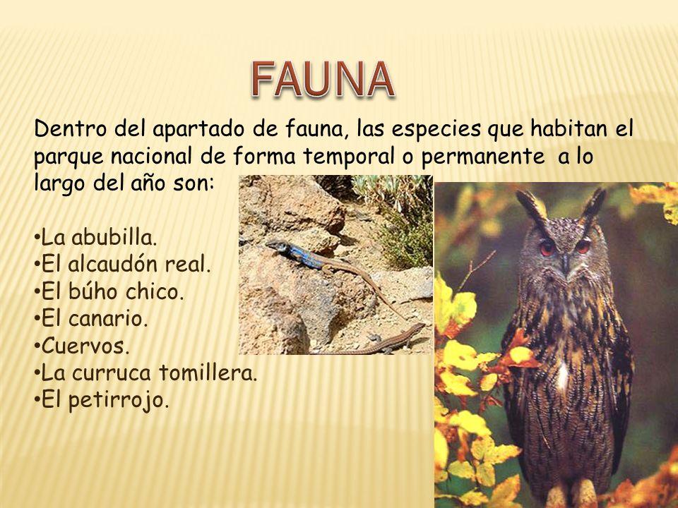 Dentro del apartado de fauna, las especies que habitan el parque nacional de forma temporal o permanente a lo largo del año son: La abubilla. El alcau