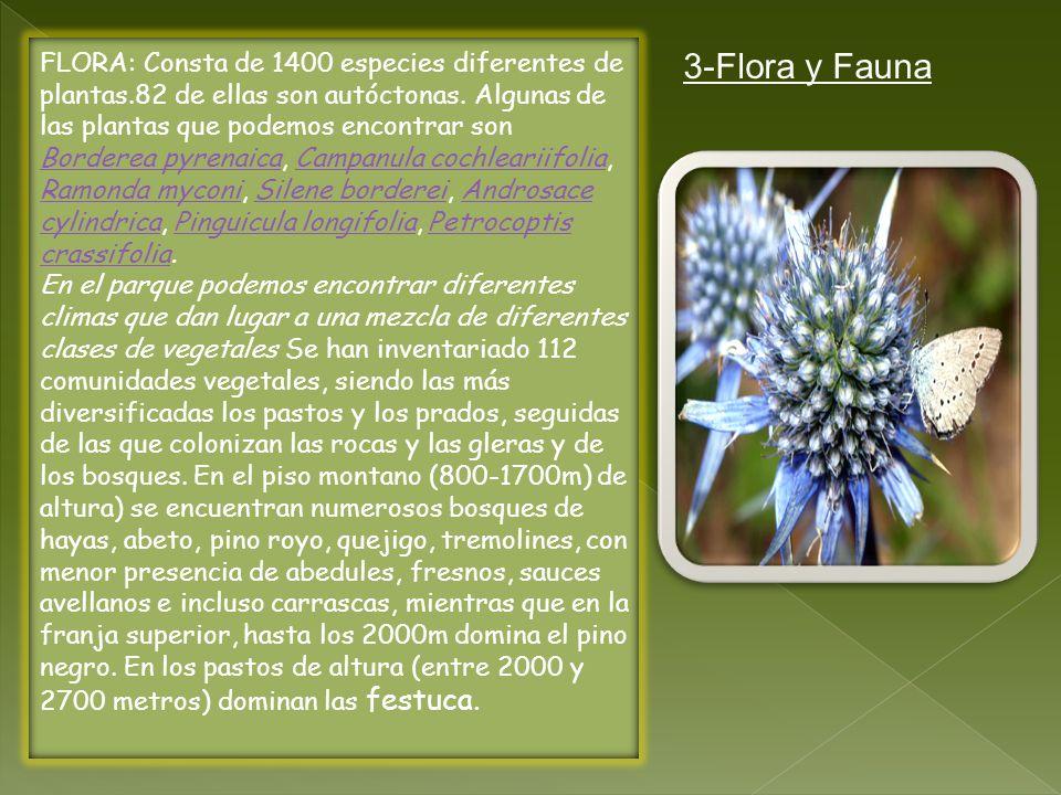 FLORA: Consta de 1400 especies diferentes de plantas.82 de ellas son autóctonas. Algunas de las plantas que podemos encontrar son Borderea pyrenaica,