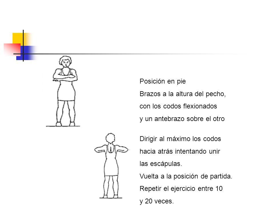 Posición en pie Brazos a la altura del pecho, con los codos flexionados y un antebrazo sobre el otro Dirigir al máximo los codos hacia atrás intentand