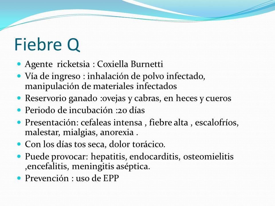 Fiebre Q Agente ricketsia : Coxiella Burnetti Vía de ingreso : inhalación de polvo infectado, manipulación de materiales infectados Reservorio ganado