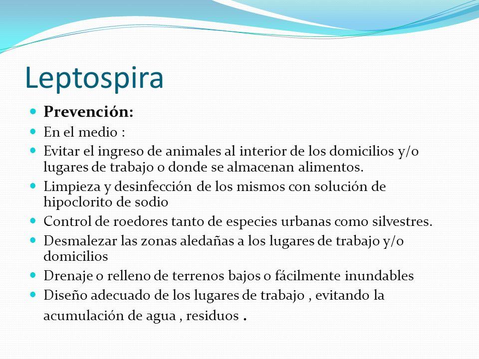 Leptospira Prevención: En el medio : Evitar el ingreso de animales al interior de los domicilios y/o lugares de trabajo o donde se almacenan alimentos