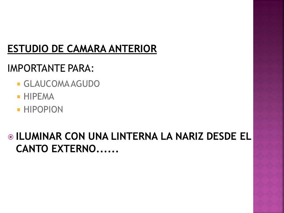 ESTUDIO DE CAMARA ANTERIOR IMPORTANTE PARA: GLAUCOMA AGUDO HIPEMA HIPOPION ILUMINAR CON UNA LINTERNA LA NARIZ DESDE EL CANTO EXTERNO......