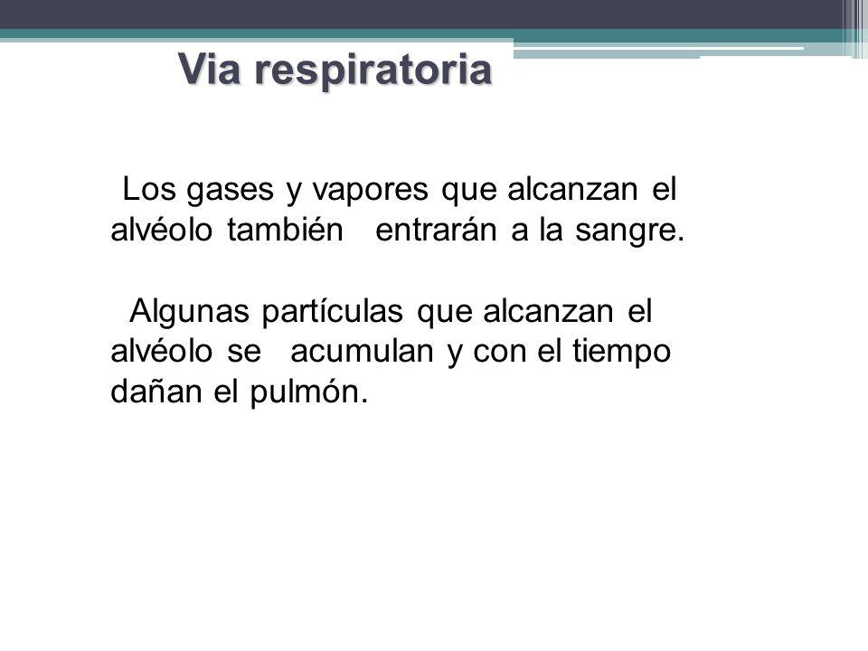 Los gases y vapores que alcanzan el alvéolo también entrarán a la sangre. Algunas partículas que alcanzan el alvéolo se acumulan y con el tiempo dañan