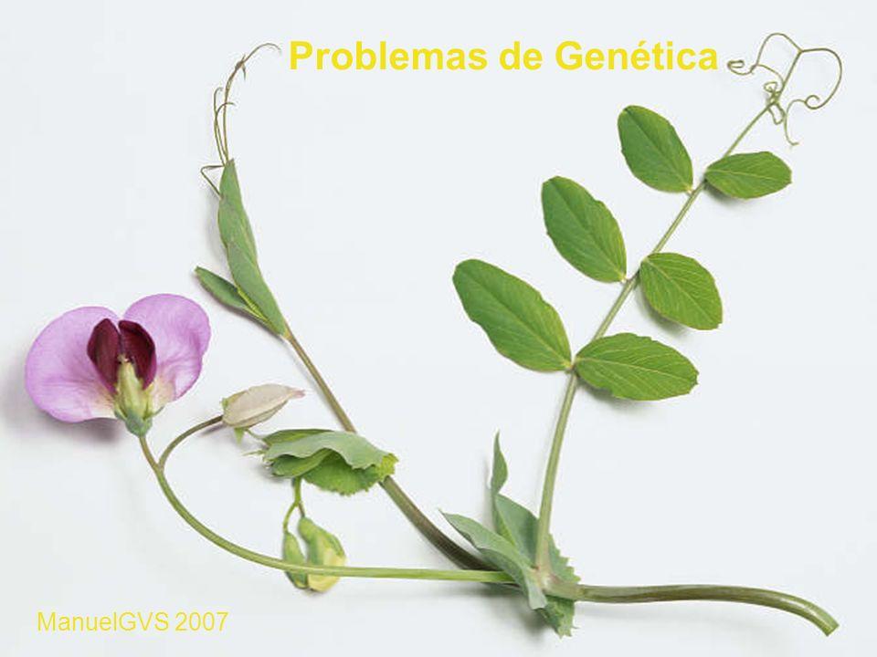 Problemas de Genética ManuelGVS 2007