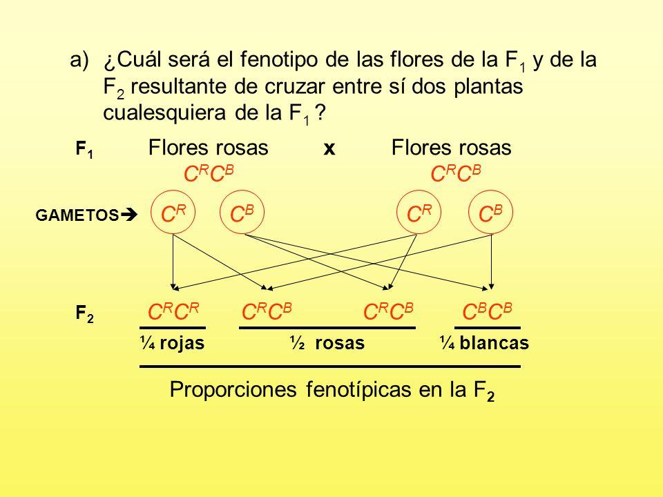 a)¿Cuál será el fenotipo de las flores de la F 1 y de la F 2 resultante de cruzar entre sí dos plantas cualesquiera de la F 1 ? Flores blancasFlores r