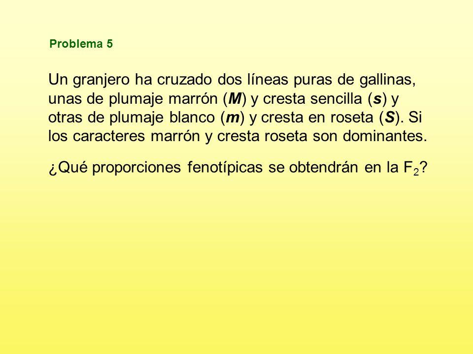 b)¿Cuál será el fenotipo de la descendencia obtenida de un cruzamiento de las F 1 con su genitor rojo, y con su genitor blanco.