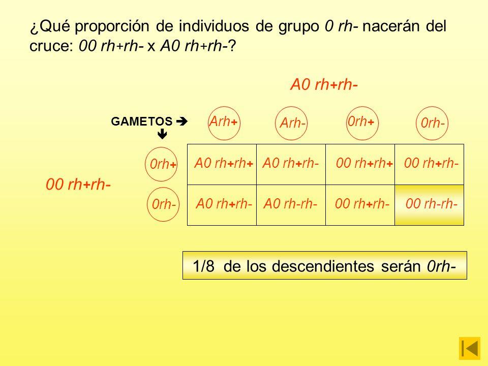 ¿Qué proporción de individuos de grupo 0 rh- nacerán del cruce: 00 rh + rh- x A0 rh + rh-? A0 rh + rh- Arh + Arh- 0rh + 0rh-0rh + 0rh- GAMETOS A0 rh +