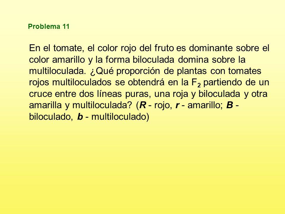 b+bs+s b+s+ b+s bs+ bsb+sbs GAMETOS b+b+s+s b+b s+s b+b+ ss b+b ss b+b s+s bb s+s b+b ss bb ss Fenotipos 3/8 Marrones, cresta lisa 1/8 Rojos, cresta lisa 3/8 Marrones, cresta arrugada 1/8 Rojos, cresta arrugada ¿Cuáles serán las proporciones genotípicas y fenotípicas del cruce b+bss x b+bs+s.