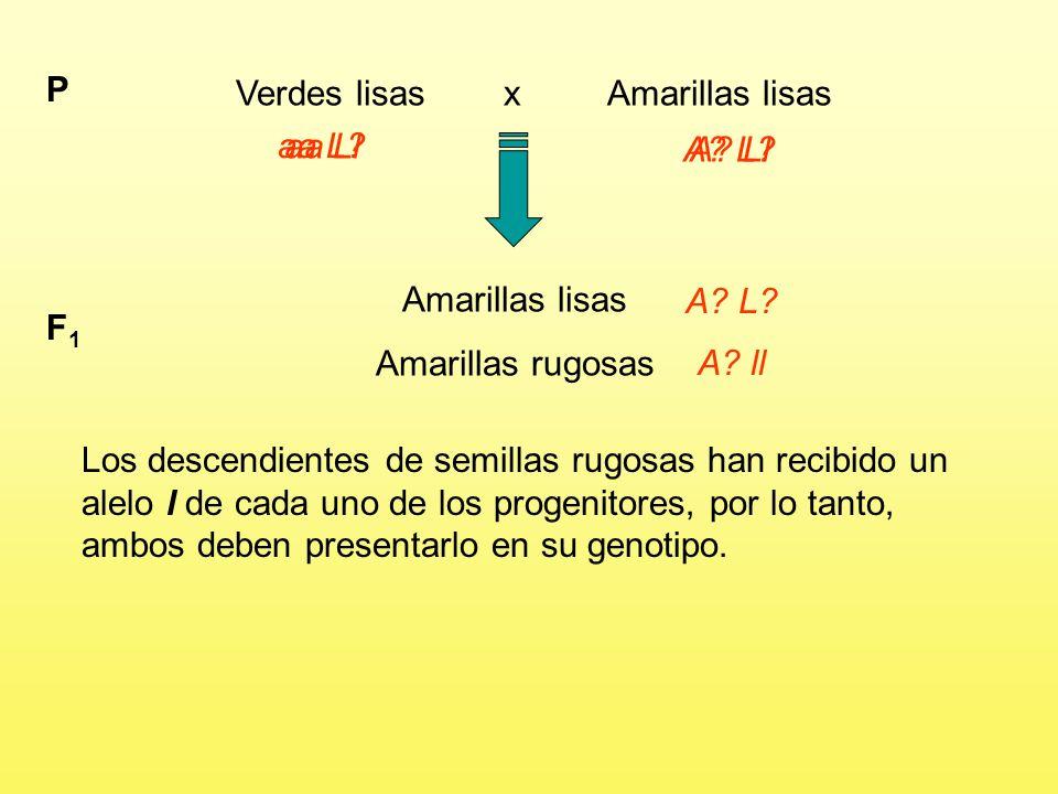Verdes lisas x Amarillas lisas P aa L?A.L. Amarillas lisas Amarillas rugosas F1F1 A.