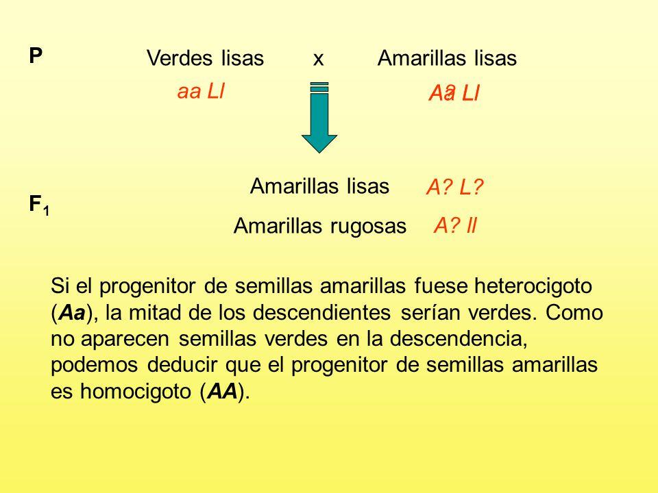 Verdes lisas x Amarillas lisas P aa Ll A.Ll Amarillas lisas Amarillas rugosas F1F1 A.