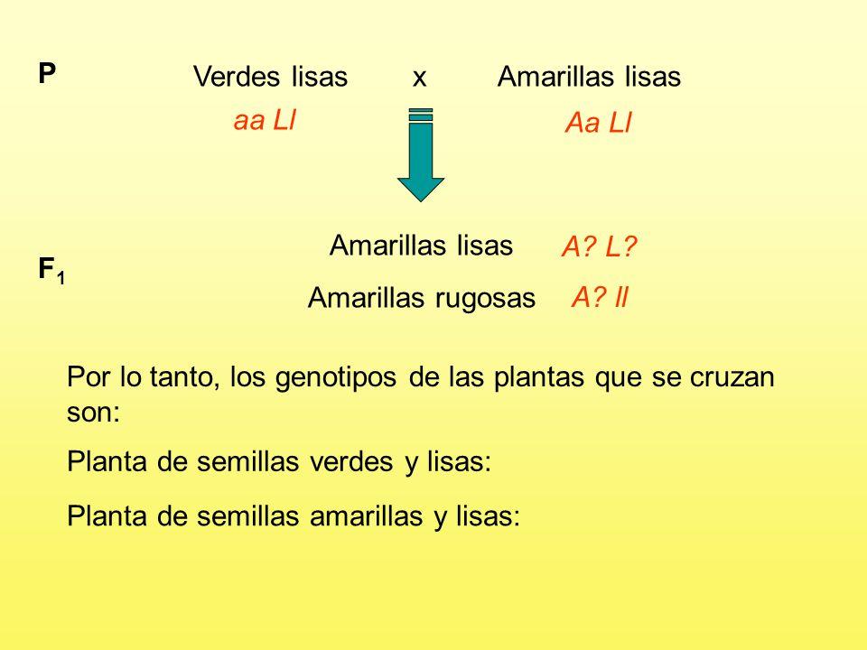 Verdes lisas x Amarillas lisas P aa Ll Aa Ll Amarillas lisas Amarillas rugosas F1F1 A.