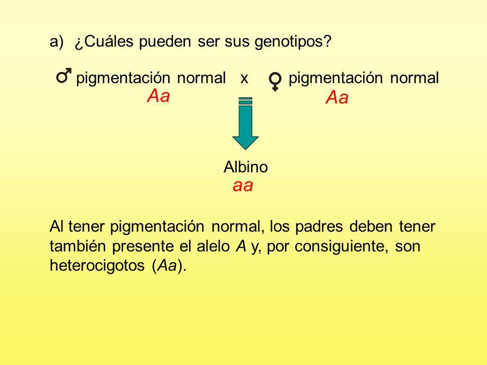 pigmentación normal x pigmentación normal a)¿Cuáles pueden ser sus genotipos? Albino Como indica el enunciado, el albinismo se debe a la presencia de