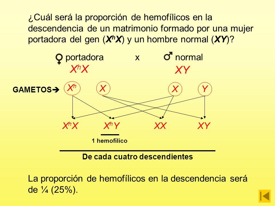 La hemofilia es una enfermedad hereditaria que se debe a un gen recesivo situado en el cromosoma X. ¿Cuál será la proporción de hemofílicos en la desc