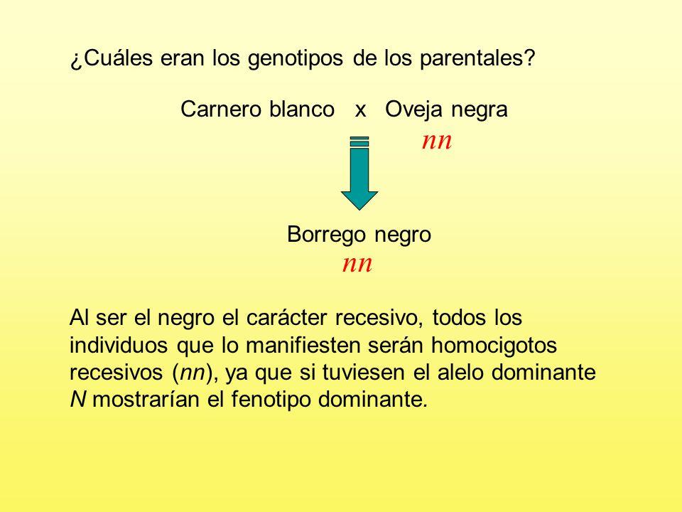 Problema 3 La lana negra de los borregos se debe a un alelo recesivo, n, y la lana blanca a su alelo dominante, N.