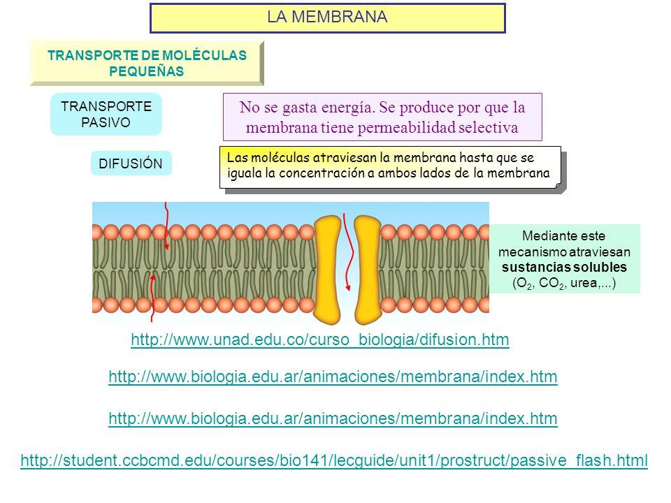 LA MEMBRANA TRANSPORTE DE MOLÉCULAS PEQUEÑAS DIFUSIÓN TRANSPORTE PASIVO No se gasta energía. Se produce por que la membrana tiene permeabilidad select