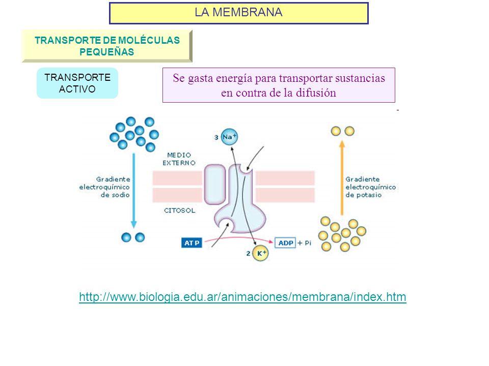 LA MEMBRANA TRANSPORTE DE MOLÉCULAS PEQUEÑAS TRANSPORTE ACTIVO Se gasta energía para transportar sustancias en contra de la difusión http://www.biolog