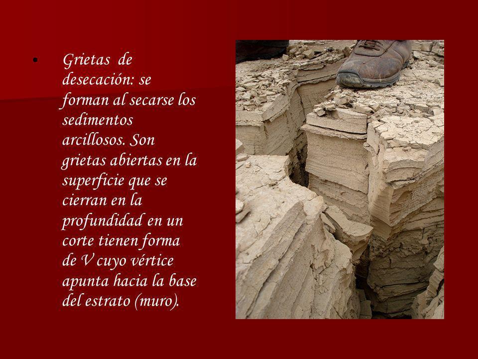 Grietas de desecación: se forman al secarse los sedimentos arcillosos. Son grietas abiertas en la superficie que se cierran en la profundidad en un co