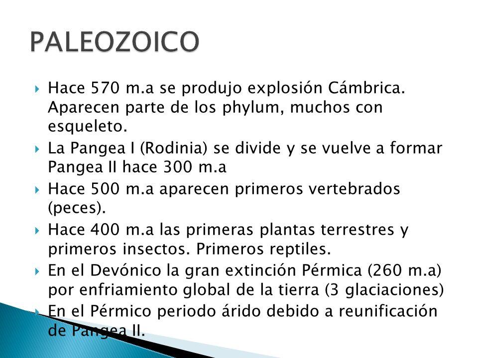 Divisiones cronológicas en ERAS 1. PALEOZOICO 2. MESOZOICO 3. CENOZOICO