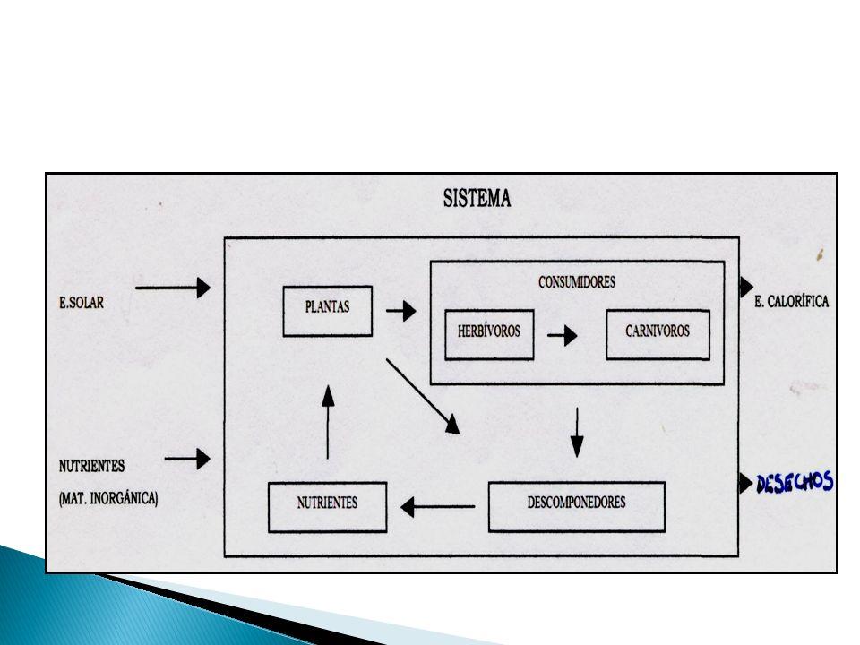 SISTEMA: conjunto de elementos o componentes y sus relaciones entre ellos. Un sistema no es A+B+C sino la interacción entre todas las partes lo que da