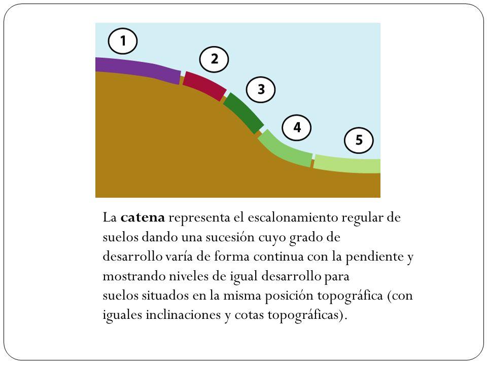 La catena representa el escalonamiento regular de suelos dando una sucesión cuyo grado de desarrollo varía de forma continua con la pendiente y mostra
