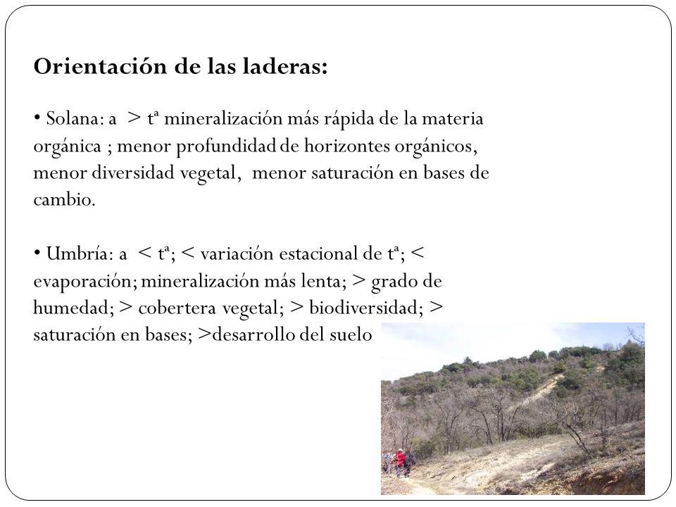 Orientación de las laderas: Solana: a > tª mineralización más rápida de la materia orgánica ; menor profundidad de horizontes orgánicos, menor diversi