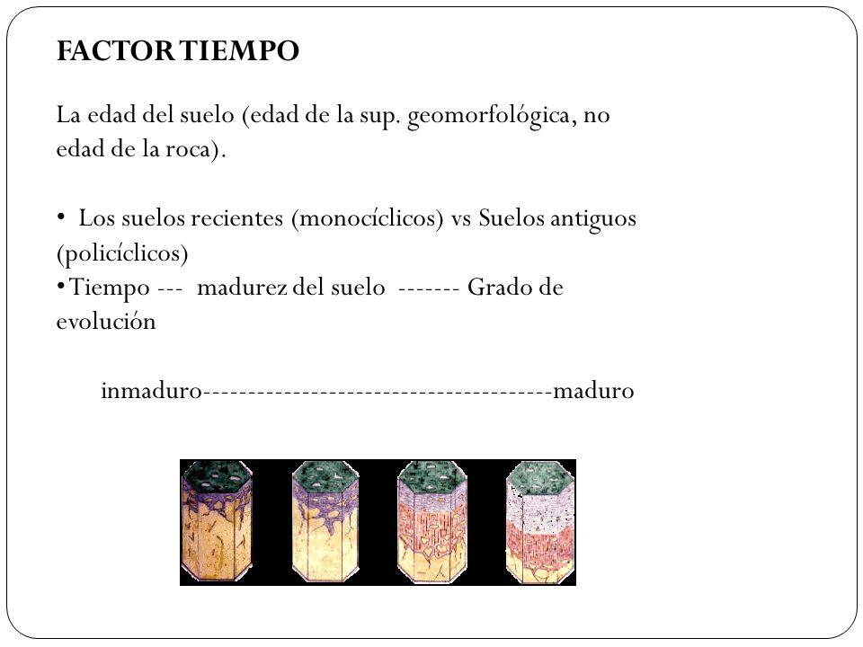 FACTOR TIEMPO La edad del suelo (edad de la sup. geomorfológica, no edad de la roca). Los suelos recientes (monocíclicos) vs Suelos antiguos (policícl