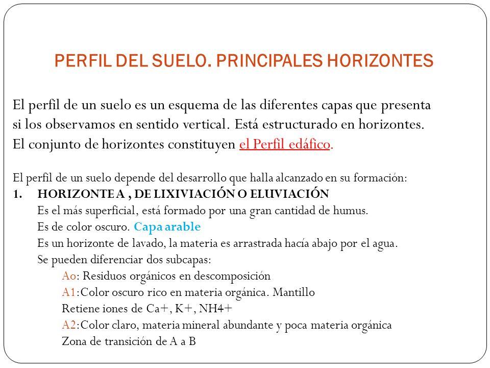 PERFIL DEL SUELO. PRINCIPALES HORIZONTES El perfil de un suelo es un esquema de las diferentes capas que presenta si los observamos en sentido vertica